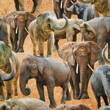 Digitale fotoprint tricot olifanten